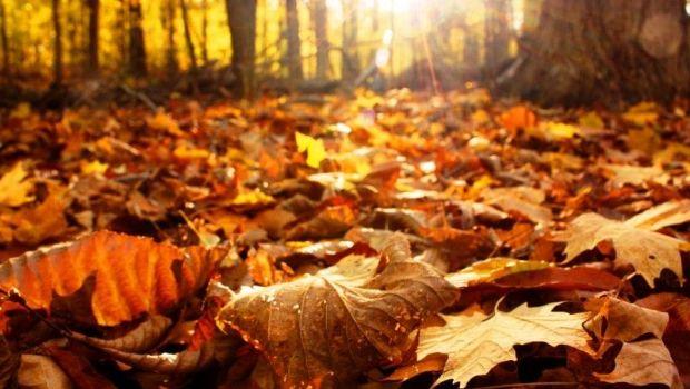 20 de marzo: Bienvenido otoño