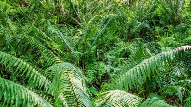Una maravilla natural poco conocida en Catamarca