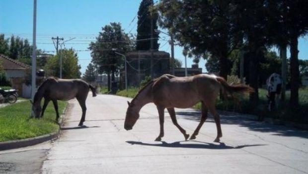 Secuestran dos caballos en Valle Viejo