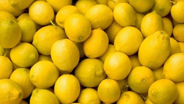 Destruyeron más de 600 kilos de limones para prevenir el HLB